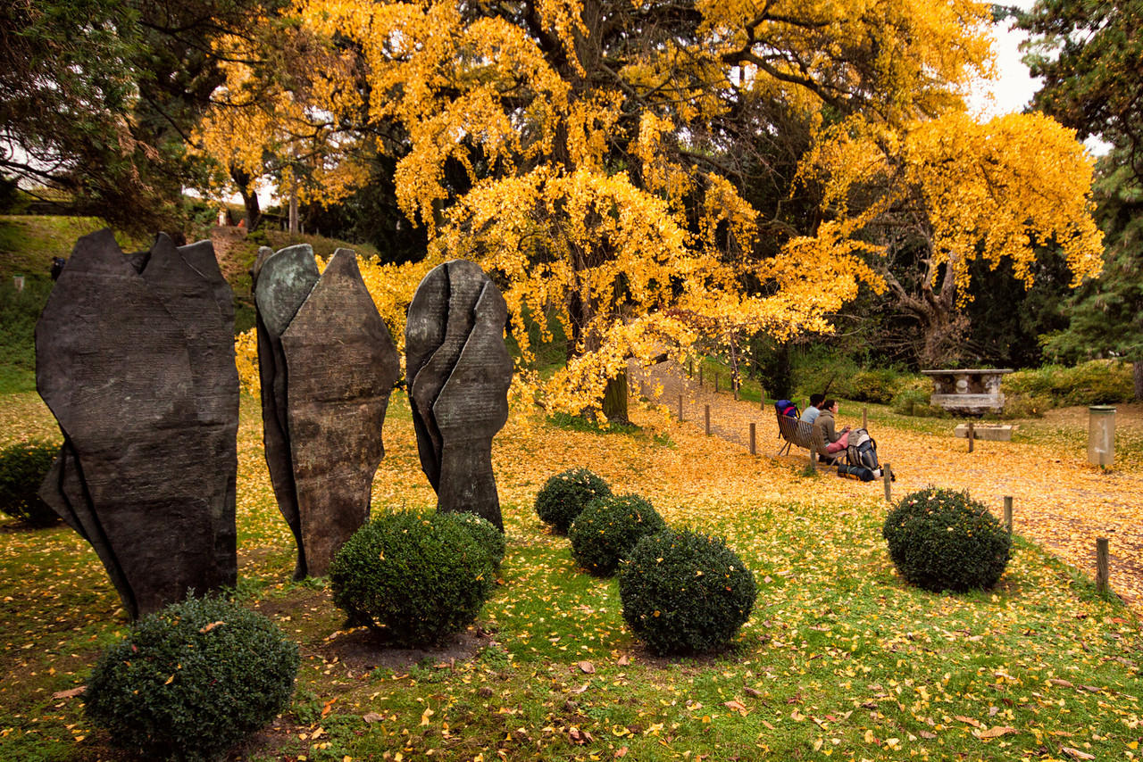 A tree losing its yellow leaves at the Jardin des Plantes in Paris, France.