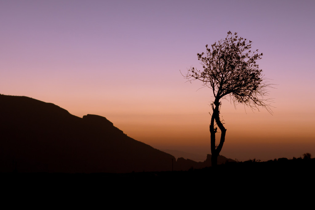 Tree Silhouette at Dawn in Jabal Shams in Oman.