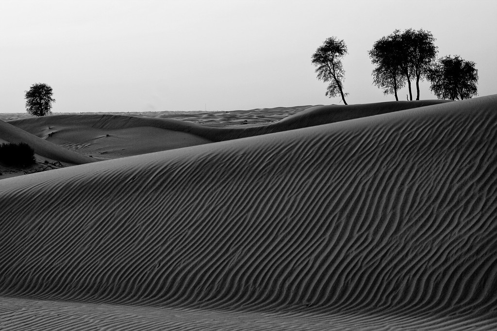 A shot of the desert with wrinkles on a dune in black and white in the UAE