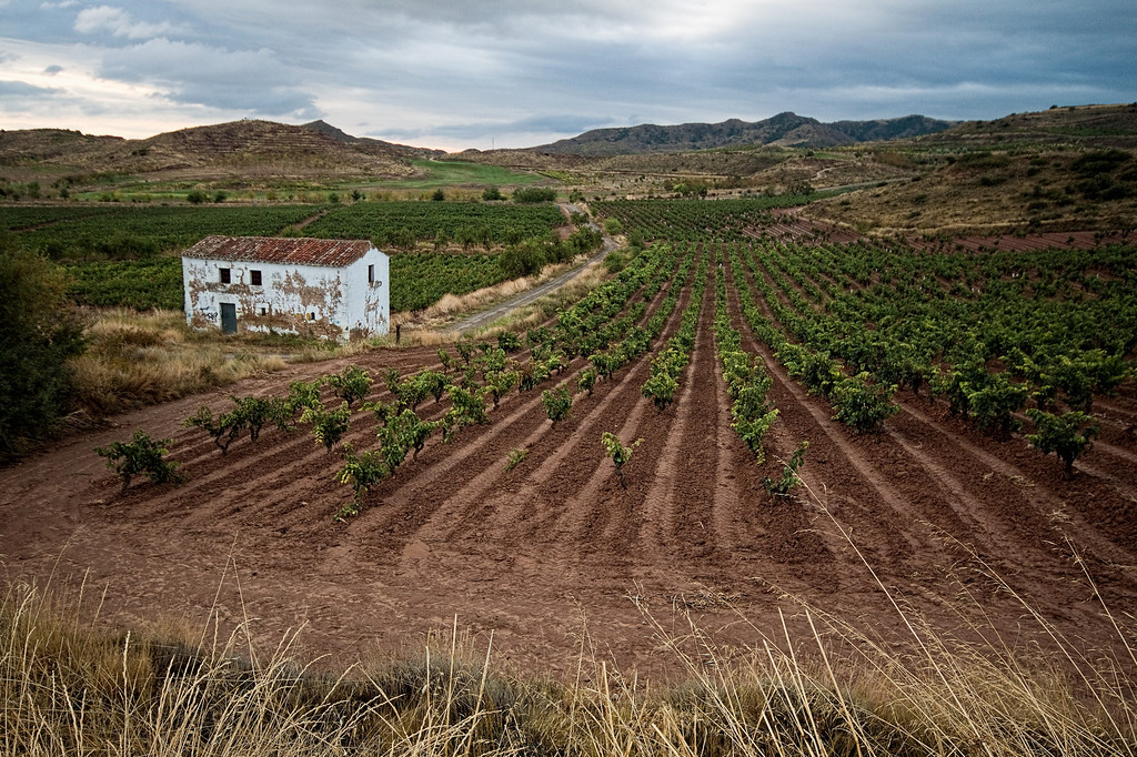 A landscape of vineyards in the La Rioja province in Spain.