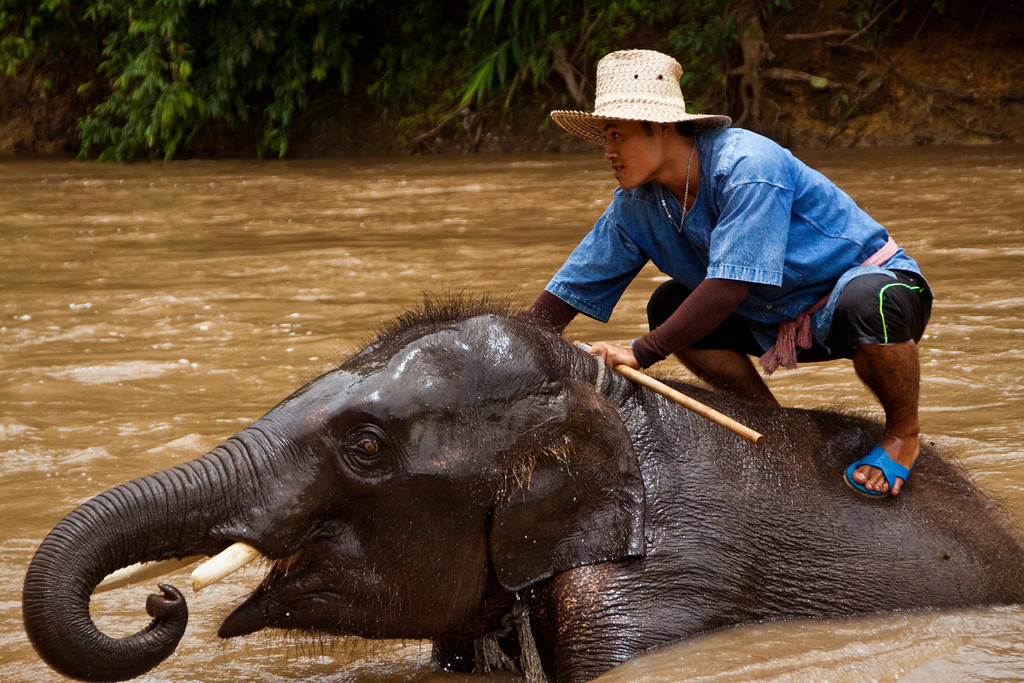 A mahout riding an elephant in the river and spraying the tourists with water in Thailand.