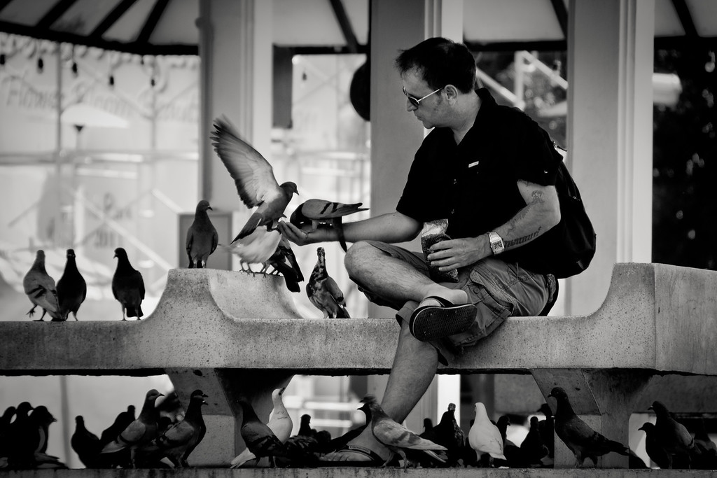A foreigner feeding pigeons from his hand in a park in Chiang Mai, North of Thailand.