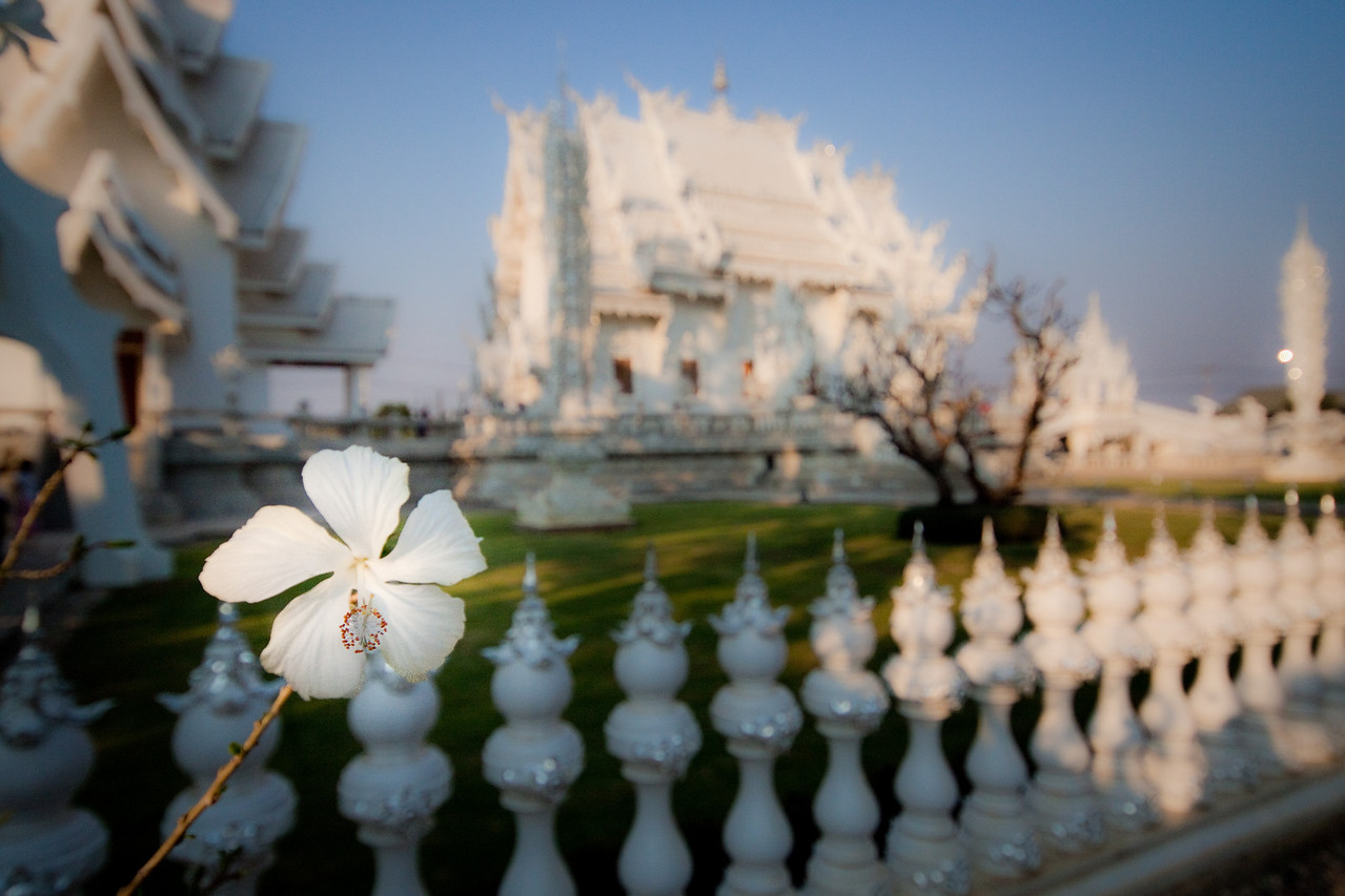 A white flower in front of the white temple wat rong khun in chiang rai, thailand