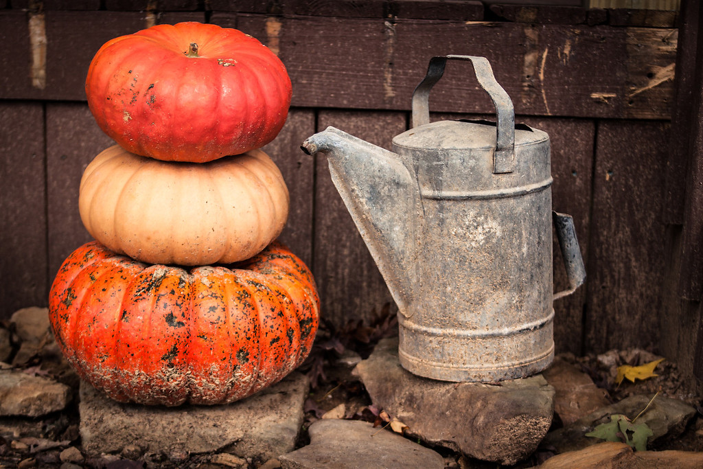 Pumpkins and a watercan during Fall in Kentucky, USA