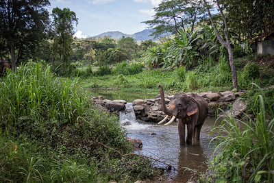 Elephant Bath - Thailand