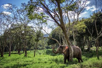Need a Rub Elephant